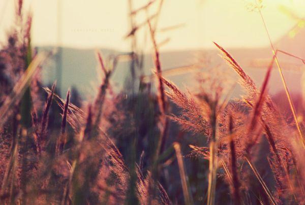 summer_hues1