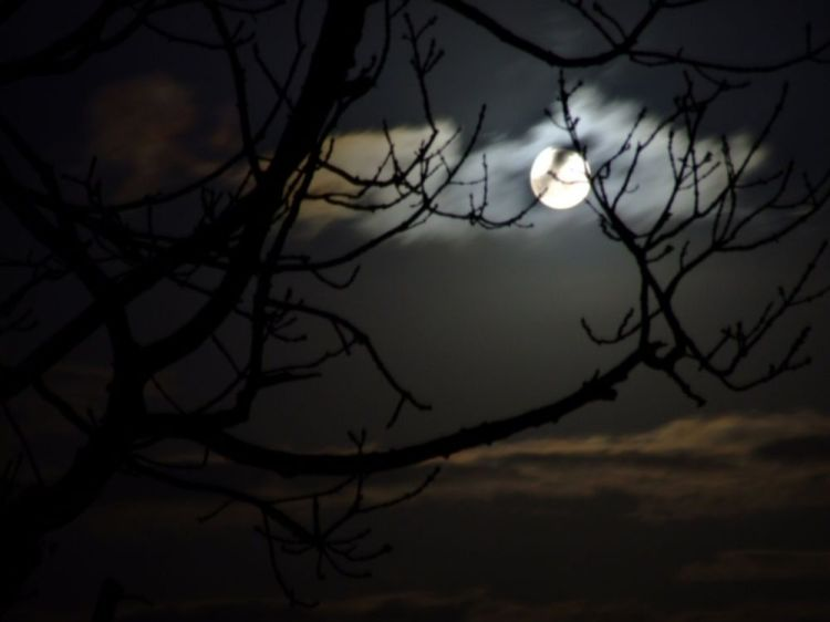 moonlight4