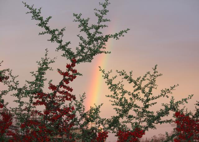 Day_After_Christmas_Rainbow