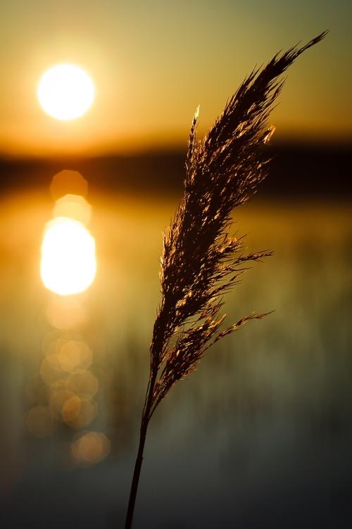healing_past_lives