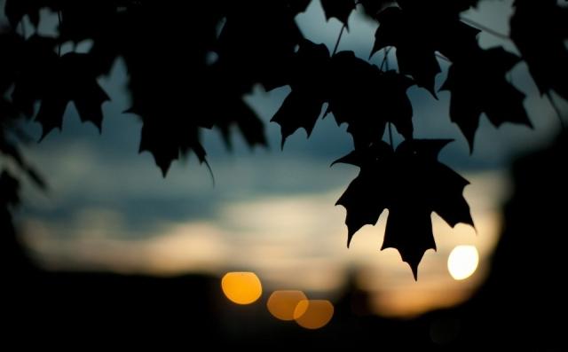 last_nights_of_summer