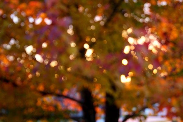 fall_reveals_past_life