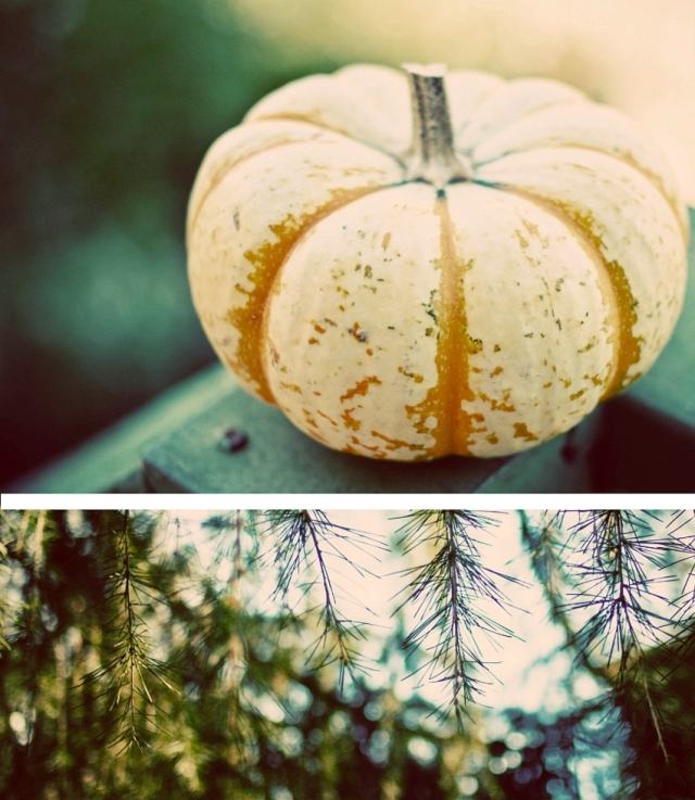 autumn_is_here