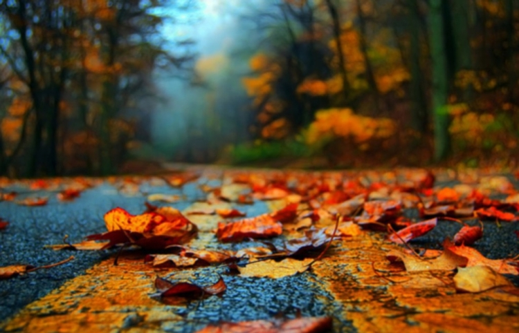 autumn_road_to_enlightenment