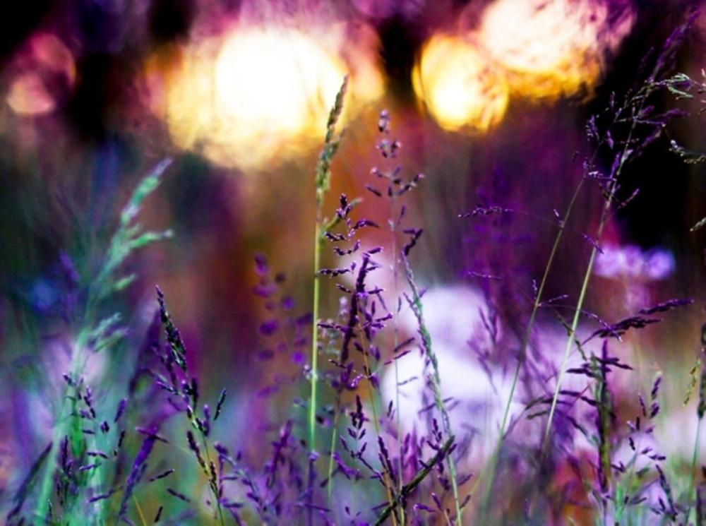 healing_flowers
