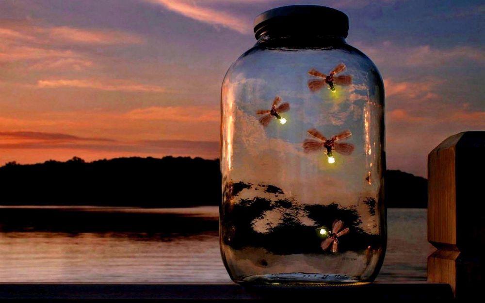 magic_summer_fireflies