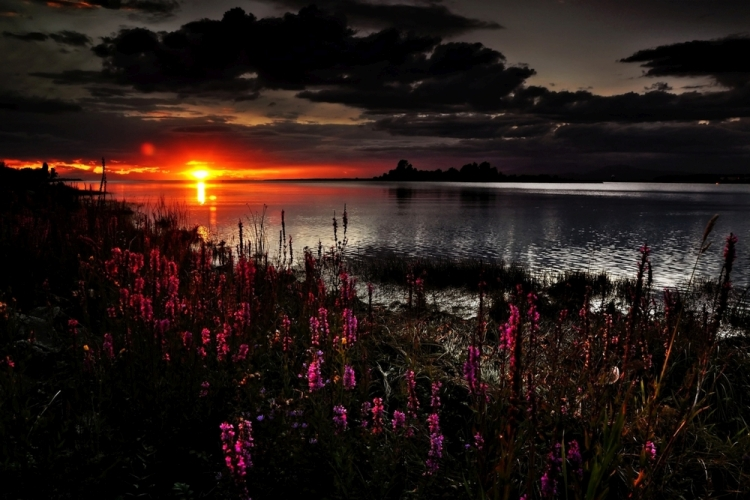 Flowers-Lake-Sunset
