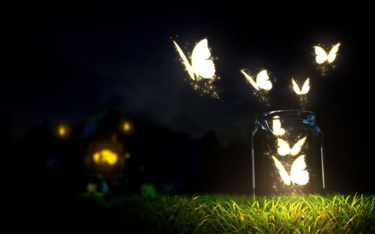 butterfly-lights