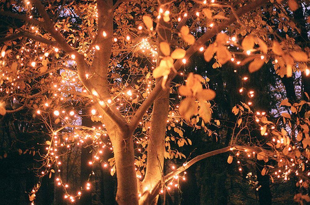autumn-lights-love-unites